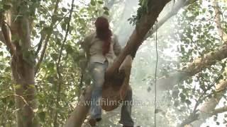 The Honey hunters of India!