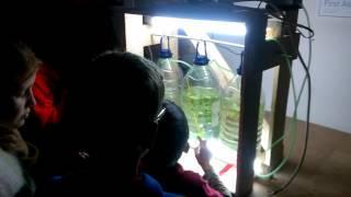 Diy algae Bioreactor