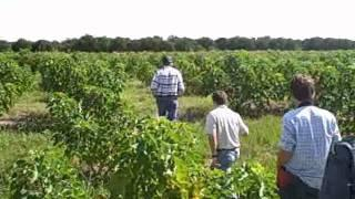 Growing Jatropha in Florida for Biodiesel