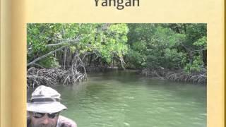 Frontiers: A Mangrove Lagoon in the Time of Climate Change
