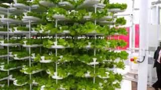 Simple vertical farming ideas