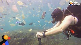 Plastic Is Taking Over The Ocean | The Dodo Earth Day 2018