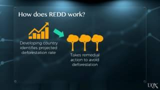 UQx Carbon101x 2.4.1.1c Case Study: REDD+