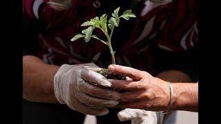 New York City celebrates Earth Day 2018