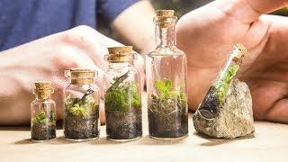 Making TINY Native Terrariums