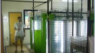 Biodiesel Production from Algae