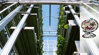 Is Vertical Farming The Way To Feed Cities?