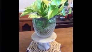 Decorating Houseplants Picture Gallery Ideas With House Plants | Golden Pothos In Waterhouseplant
