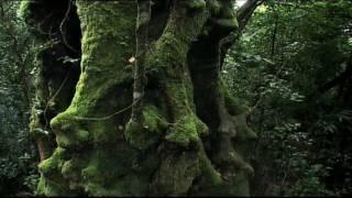 Rainforest: Beneath the Canopy Part 01