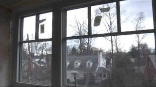 Home Energy Efficiency Tips: Windows