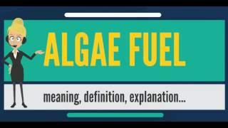 What is ALGAE FUEL? What does ALGAE FUEL mean? ALGAE FUEL meaning, definition & explanation