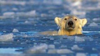 Melting Arctic Ice Caps