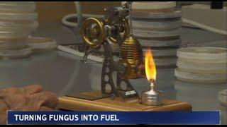 Could Cheaper, Cleaner Biofuel Replace Ethanol?