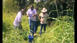 Shamba Shape Up Sn 03 - Ep 4 Chickens, Amaranth, Water Pumps (English)