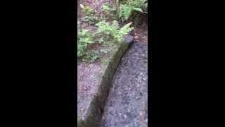 [vertical vid] forest with stream / Wald mit Bach