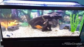Ebay Aquarium LED Lighting 75 Gallon Tank