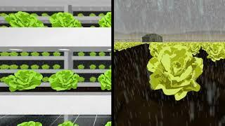 Vertical Farming Then and Now