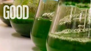 Using Algae To Replace Oil? | GOOD