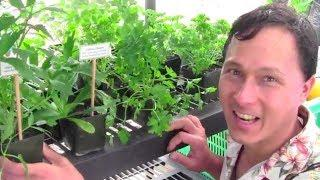 Fruit Trees, Herbs & Vegetables that Grow in the Tropics and Subtropics