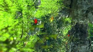 Vertical panning shot of Red flowers in forest shot in Israel.