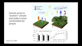Forest Stewardship: Adapting to and Mitigating Climate Change Impacts