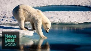 How Fast Is Arctic Sea Ice Melting?