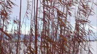 25. Waste to Willows - An easy to grow energy crop that also treats your waste