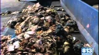 CleanWorld's Sacramento BioDigester Turning Food Waste Into Energy