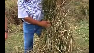 Virginia Farm Bureau  Switchgrass and Alternative Fuels