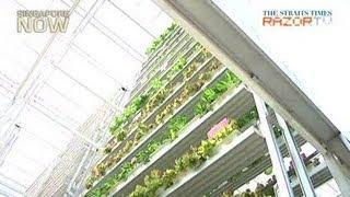 Singapore's first vertical farm