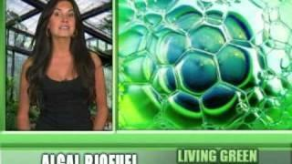 Alternative Energy - Biofuel from Algae