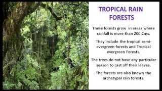 Natural Vegetation - CBSE NCERT Social Science