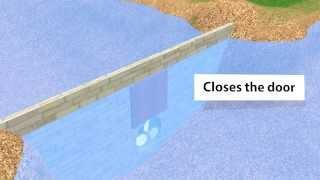 Tidal energy - free energy from the ocean animated and explained