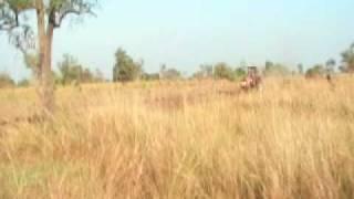 Opening Jatropha plantation tractor3