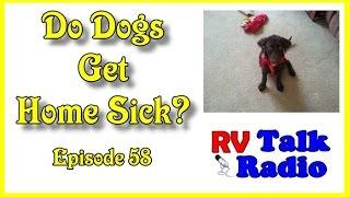 Do Dogs Get Home Sick? Grass Is Always Greener? | RV Talk Radio Ep.58  #podcast