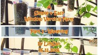 Singapore LimSan : A Simple&Easy Window Vertical Farm - Part 2 WATERING