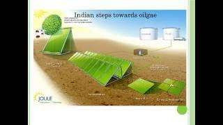 Biofuel from algae