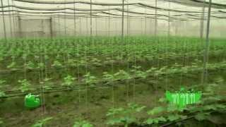 Vertical Farming (संरक्षित खेती) In Baatein Kheti Ki - On Green TV