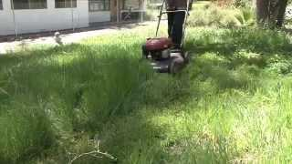 Lawn Practices - Grass can Always be Greener