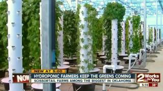 "The world's largest aeroponic farm, exploding with food in the middle of a ""food desert"""
