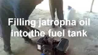 Making oil from jatropha tree nuts