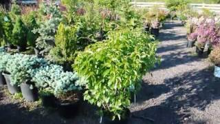 XXX Trees and Shrubs for a changing Climate