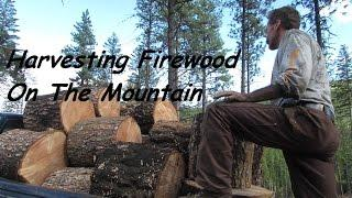 Off Grid Living: Firewood Harvesting On The Mountain