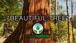 "4K Earth Day 2017 ""Beautiful Tree"" #PledgetoPlant Forest Nation Nature Relaxation Film"