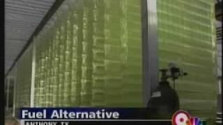 Algae as a Fuel Alternative