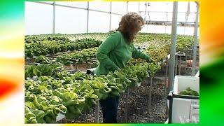 Hydroponics Farm For Profit (Greenhouse - All Year Round Harvest and Vertical Farming)
