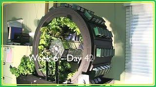 Vertical Hydroponics System (Vertical Farming and Volksgarden)