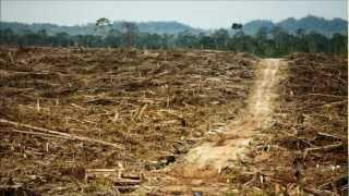 The Global Biofuel Disaster
