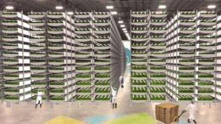 Taking food to new heights: Inside a vertical farm