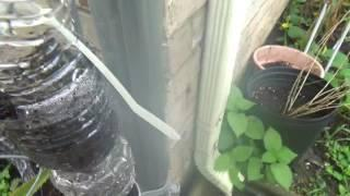 How to build Vertical Garden from plastic bottles - super easy. Budget friendly